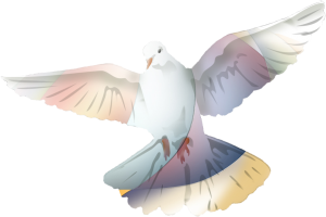 Dove image by Lisa Bullman Taylor